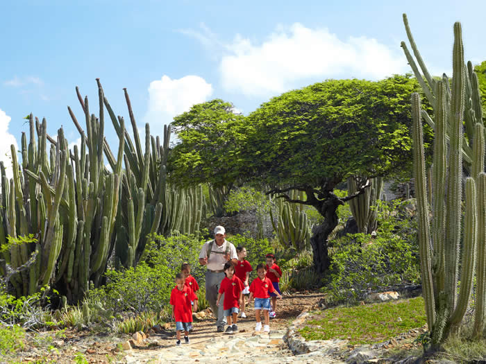 Explore The Beauty Of Caribbean: Aruba Cruise Tourism